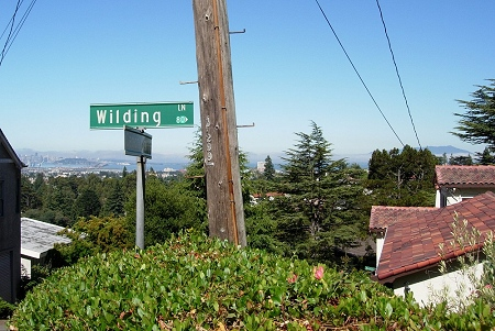 wilding lane view