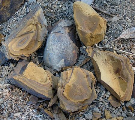 shale concretion