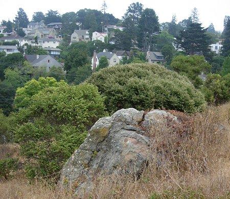 mount ararat oakland