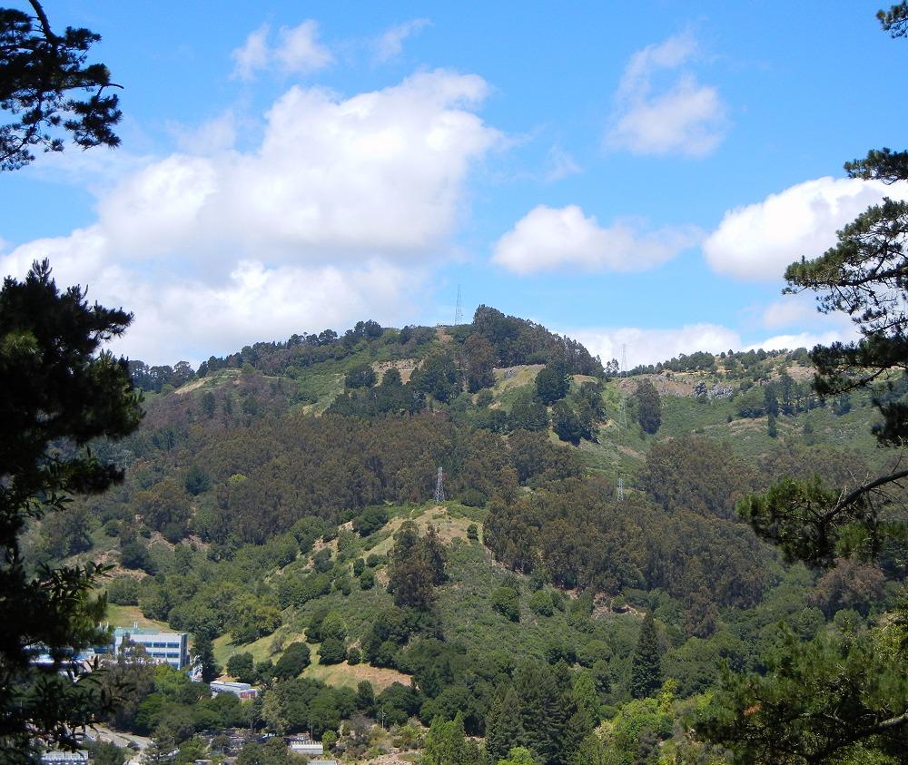 Orinda Oaks: Grizzly Peak And Moraga Basalt
