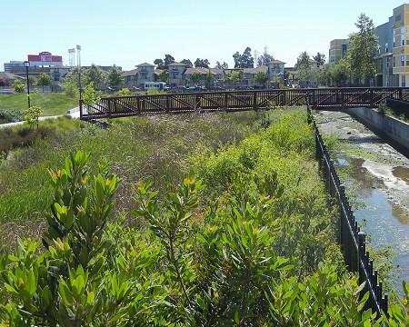 coli-gardens-creek