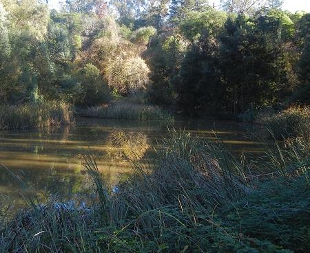 lake-aliso
