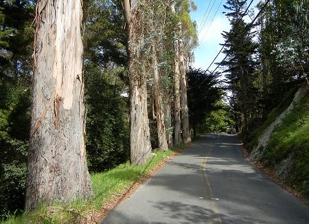 CastleDrTrees