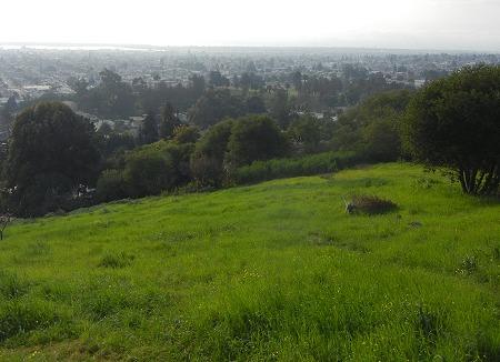 simson-field