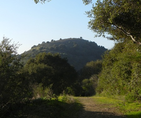 hill1175g