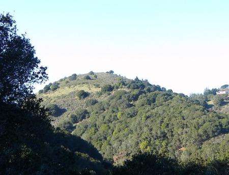 hill1175h