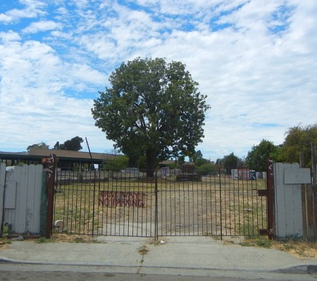 lone-tree-105th