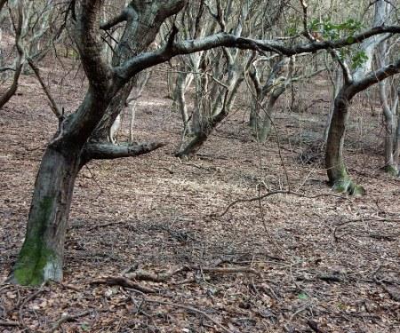 oaks-6