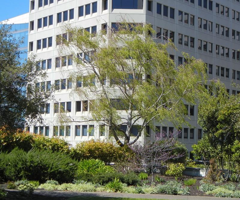 The Balsawood Boulders Of The Kaiser Roof Garden Oakland
