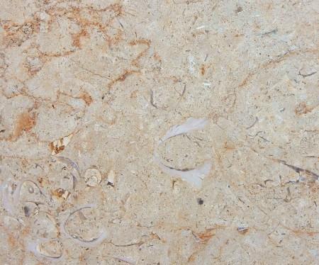 fossilif-ls-detail